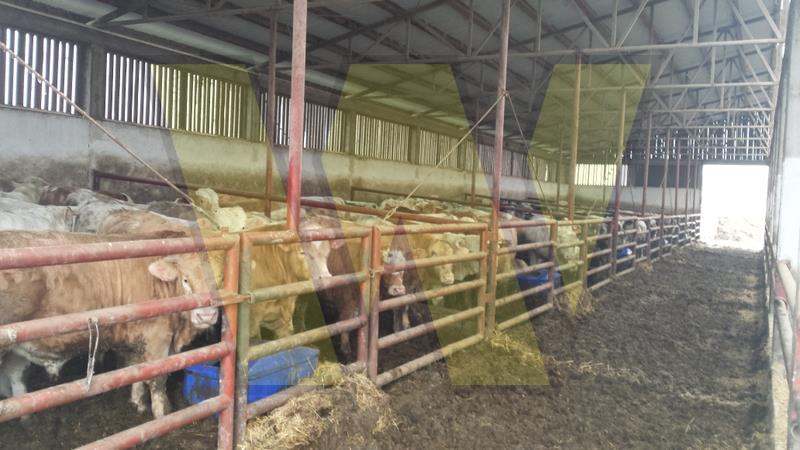 Farma u Donjem Baziju – prodaja ili najam